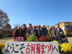 古河 菊祭り